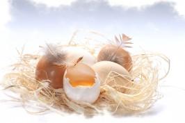 Hühnereiunverträglichkeit betrifft mehr Menschen als man denkt