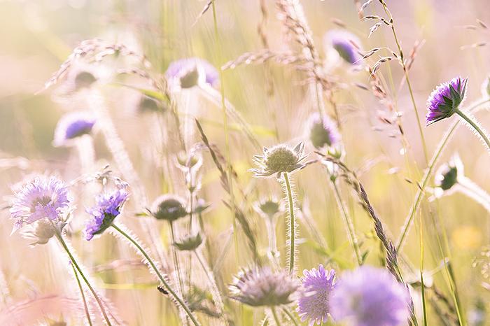 Die Darmflora des Menschen hat ihren Namen nicht von ungefähr: Sie ist ein beeindruckendes Ökosystem. © pixabay.com
