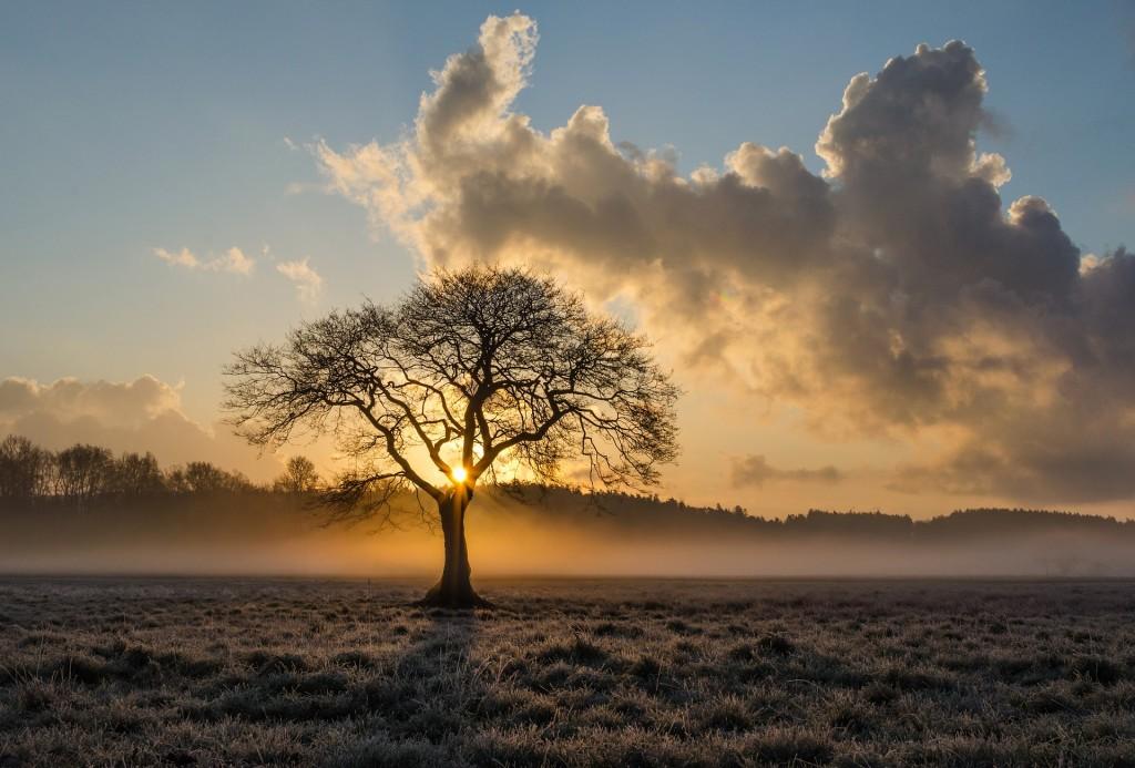 Der Darm ist für den Menschen wie die Wurzel für den Baum. ©pixabay