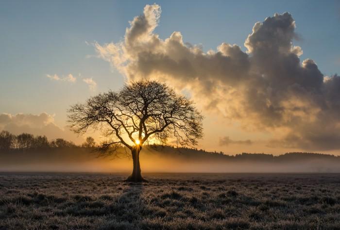 lone-tree-1934897_1920_pixabay